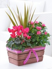 Happy Birthday Rosy Pink Autumn Planter